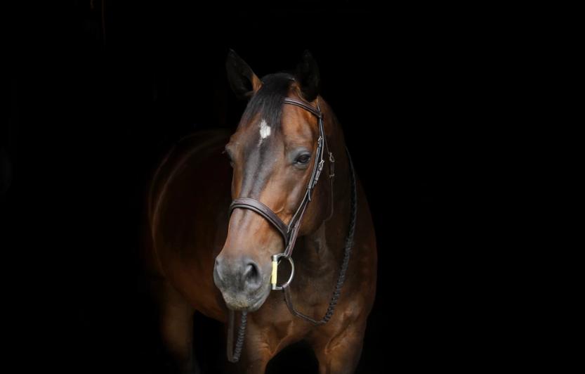 horsetherapy